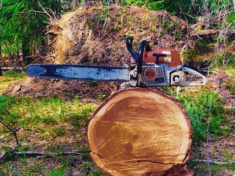 Fall trees & cut firewood