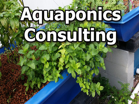 Aquaponic Consulting Sesson