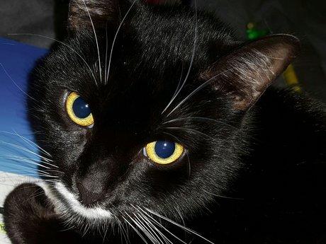 RBF cat pics