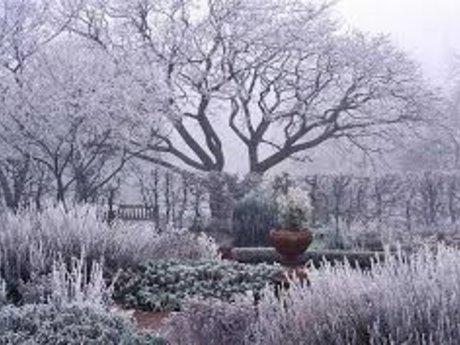 Winter gardening consult