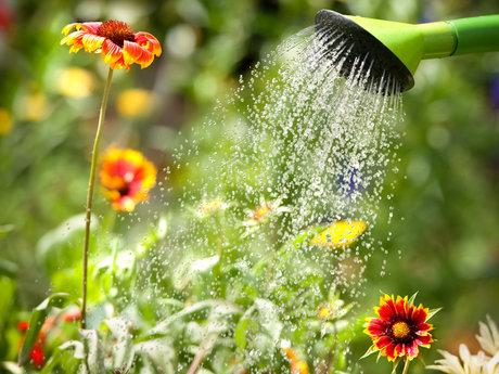 Garden:plant/water/weed