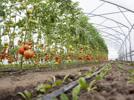 Permaculture Design Consultation