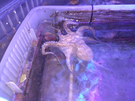 Aquarium maintenance counseling