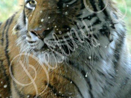 Snow Speckled Stripes (digital)