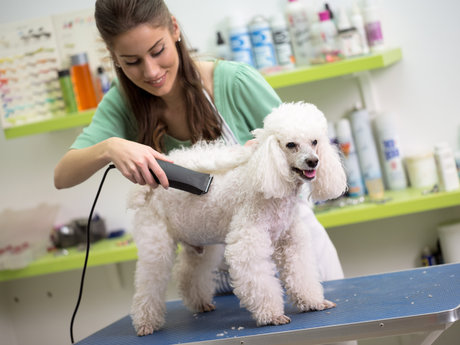 In - Home Dog Grooming