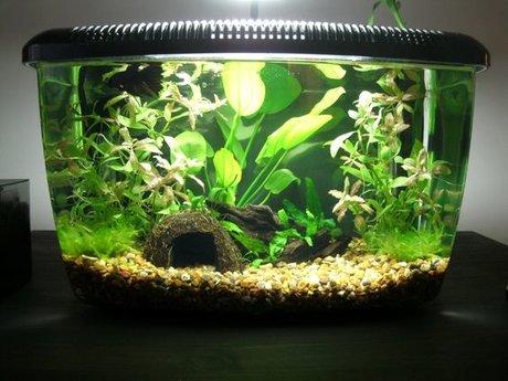 Marine and freshwater aquarium advi
