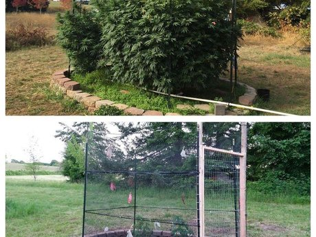 Cannabis Gardening Consulting