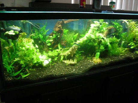 Professional Aquarium Advice