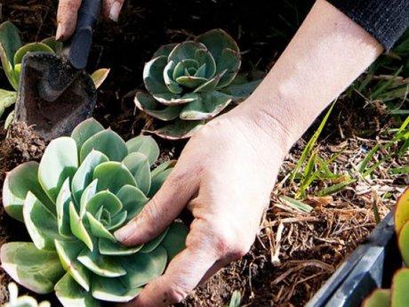 1 hour recreational garden consult