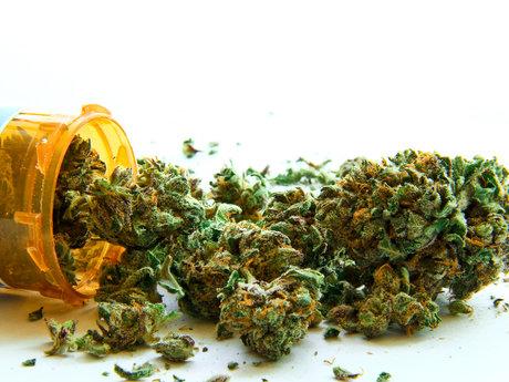 Cannabis Consultant