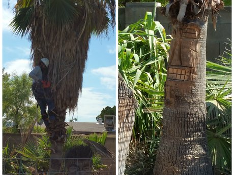 Palm Tree Removal and Tiki Face