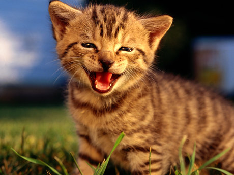 Learn how to raise kittens