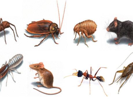 Pest Resolution