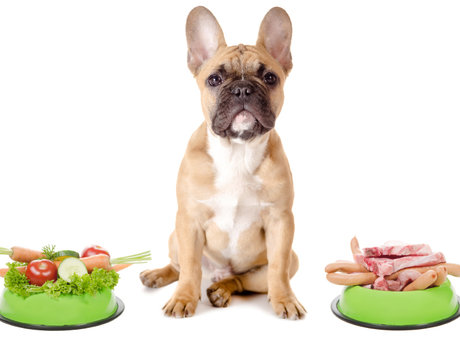 Healthy and natural food for Dogs.