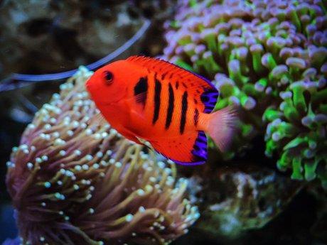 Aquarium Tech and Design