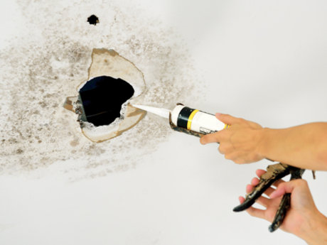 Water damage/mold repair & consult