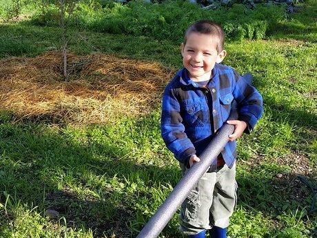 Organic vegetable gardening consult