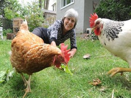 Become a chicken keeper: fresh eggs