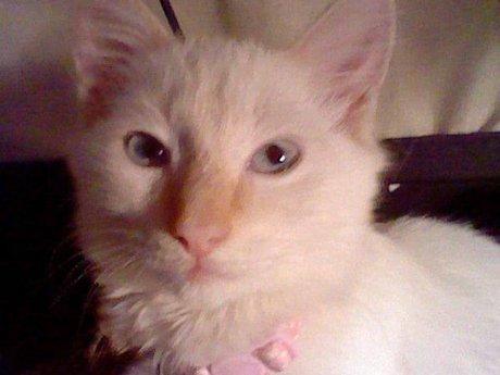 Personalized Cat Pic of Milkshakes