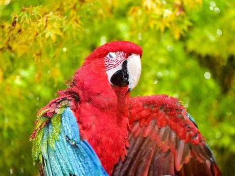 Parrot Behavior/Grooming