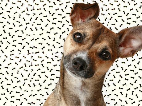 Pet Care Sheets