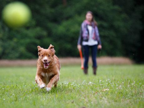 Dog Walking and Dog Loving