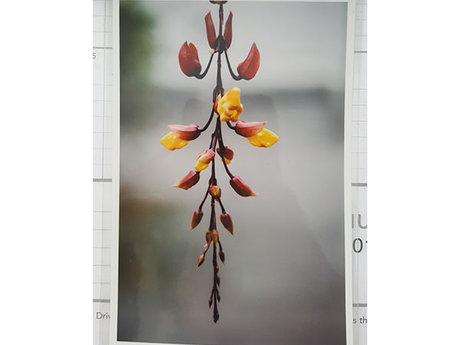 Hanging Flower 4x6 Print