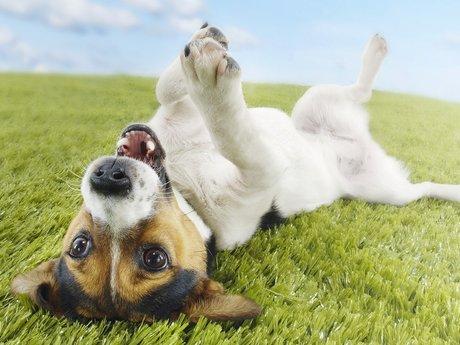 CPR & Heimlich Maneuver for dog/cat