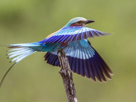 Misouri bird identification