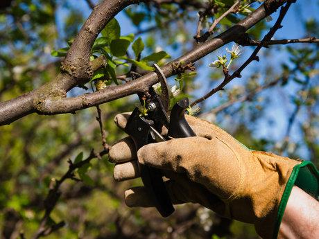 Hands-On Garden Help