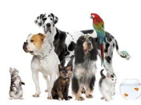 Dogsitting / Housesitting