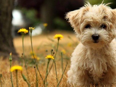 Animal care/petsitting