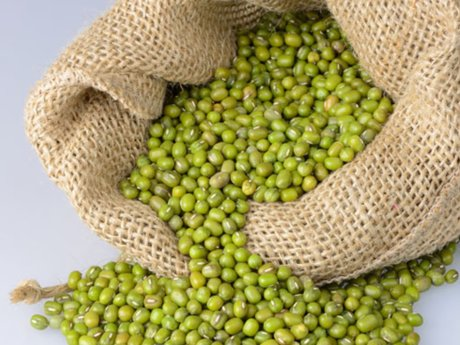 Mung beans for sprouting 4 oz.