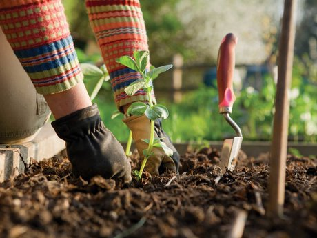 Herbs and Gardening consultation,
