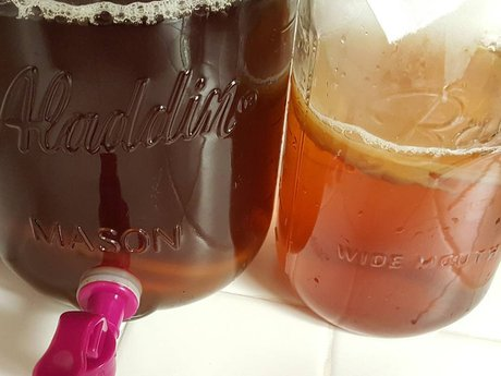 Kombucha Scoby & Brewing Lesson
