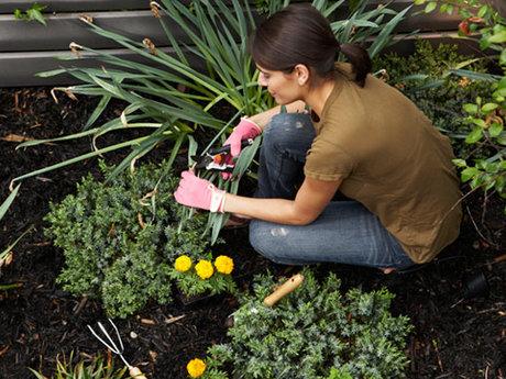 Plan Your Vegetable Garden Layout