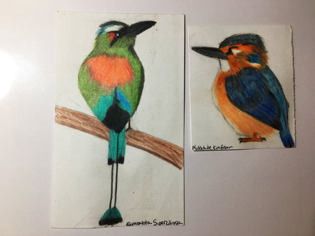 Small Bird & Insect Drawings