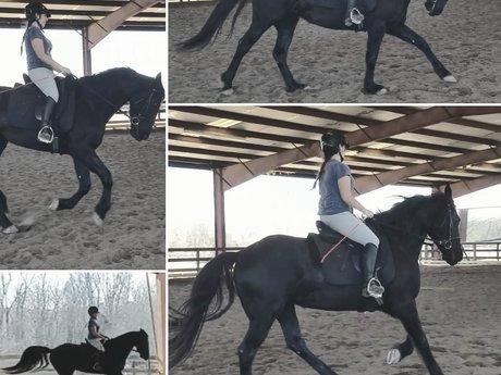 Horse Training Advice