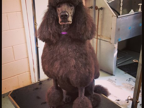 Dog Grooming :)