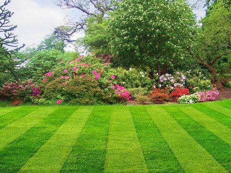 Lawn Care Consultation