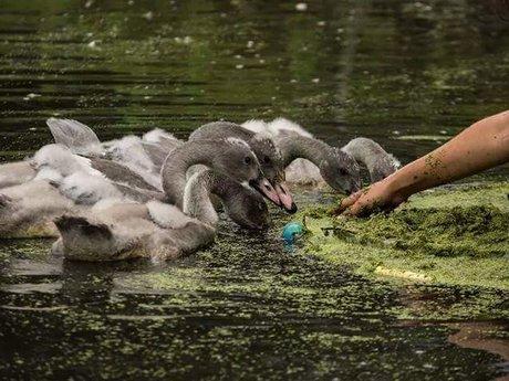 Swan Expert