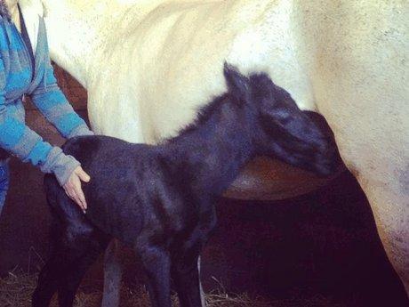 Horses: Basics For The Non Horsey