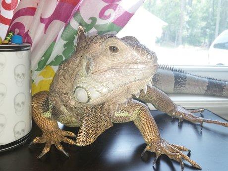 Reptile health consulting