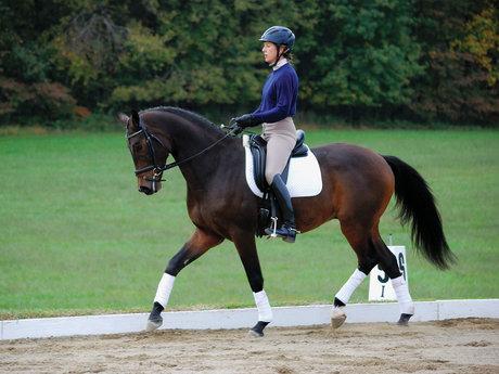 Horseback riding help