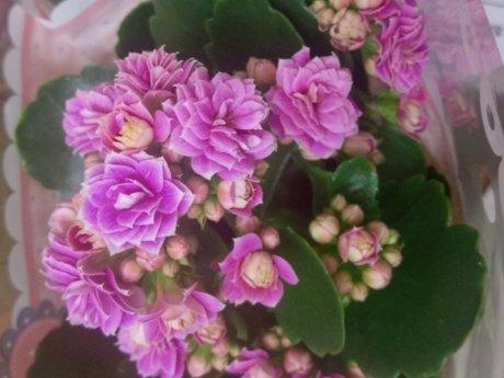 Plant Troubleshooting