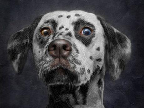 Animal Caregiver
