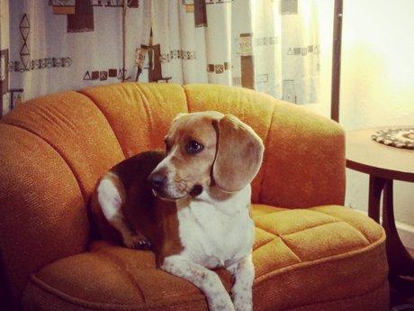 Pet sitting/ animal care & consult