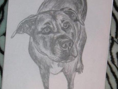 Pet portrait (drawing)