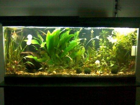 freshwater aquarium support tech