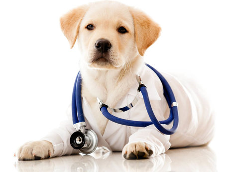 Veterinary Advice For Your Pet